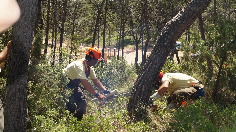 Работа в Чехии по вырубке леса